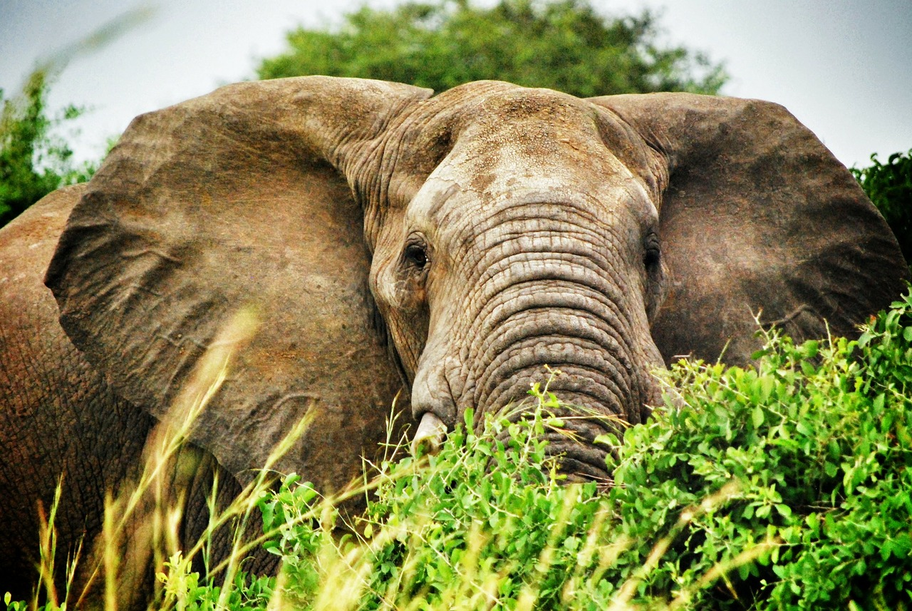 Concentrated Portfolios – The Elephant in Your Portfolio